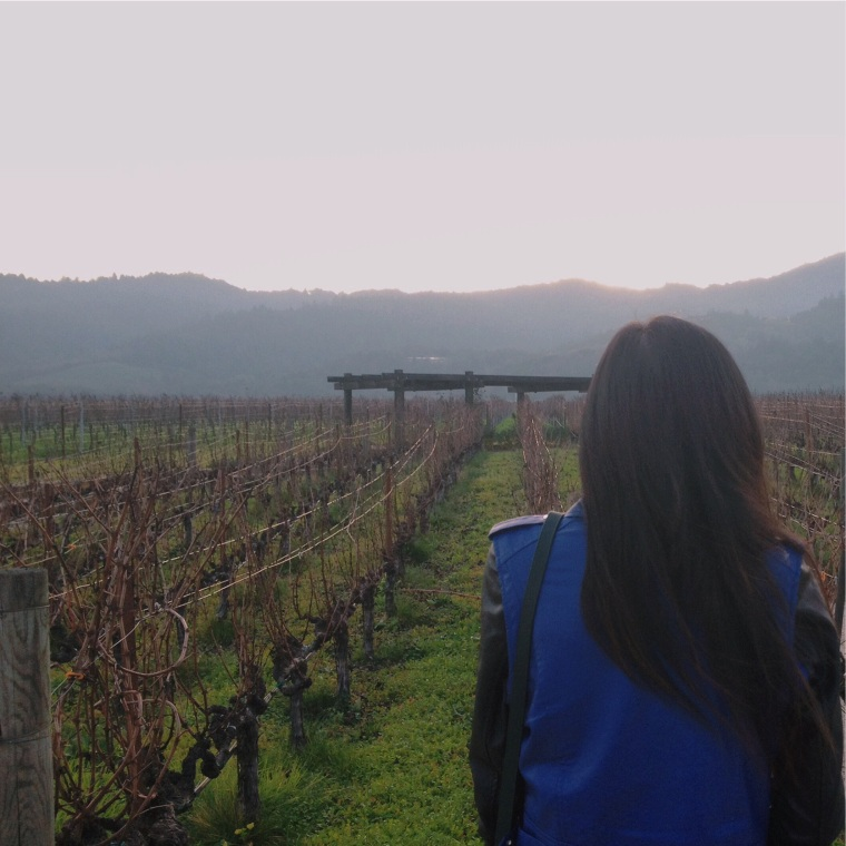 I love this view. It was very cold, but luckily my Lovers + Friends Moto Jacket kept me warm. Check out those endless rows of grapevines!