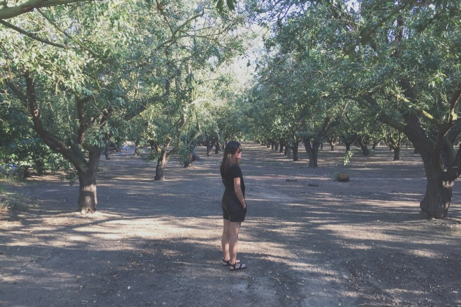 Observing the orchards :)