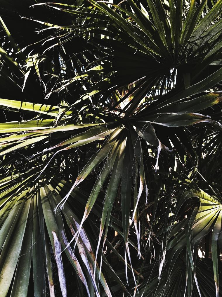 tones plants