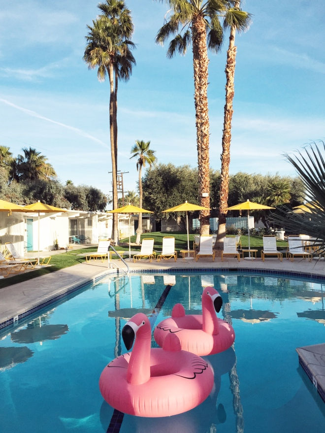 Pink flamingos in a pool